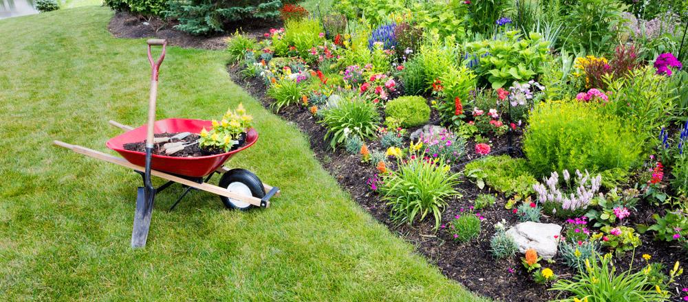 Bahçe temizlik hizmetleri